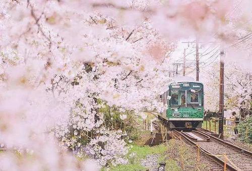 解读自然色彩的秘密-纯真浪漫的樱花粉